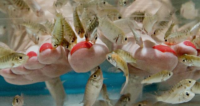 Педикюр рыбками как делать